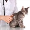 Ветеринарные клиники в Кесовой Горе